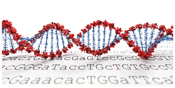 Have You Got Fat Genes in your DNA?